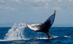 Voyage initiative avec les baleines de Madagascar, chant cristal, bien-être