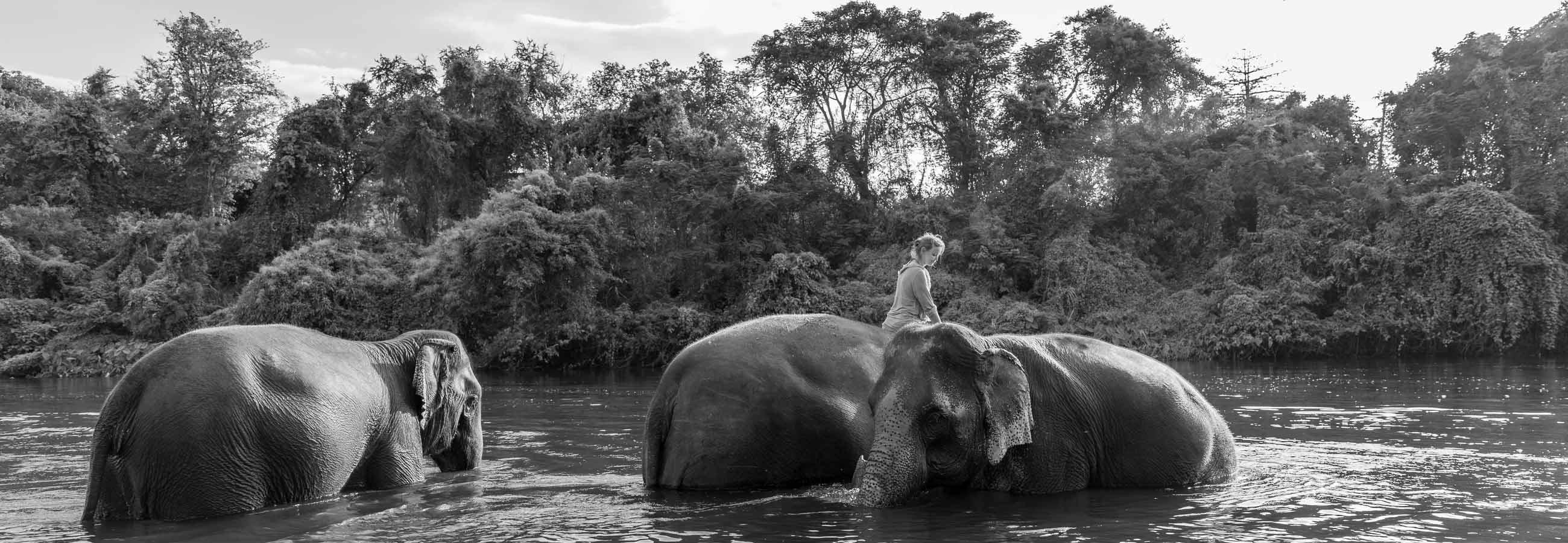 Atelier avec les éléphants